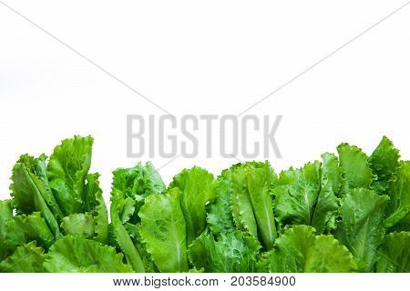 Vegetable Border Background With Copy Space. Fresh Raw Letucce Isolated Flat Lay. Vegan Food Concept