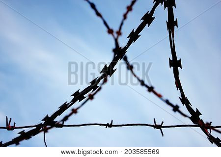 Restricted area - metal barbed wire on sky background