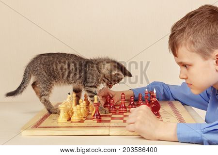 Young grandmaster with a tabby kitten plays chess.