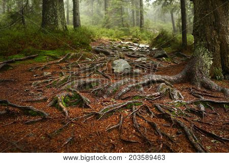 A web of tree roots growing over rocks next to a hiking trail. A wooden bench and table in background. Forest scene in early fall with some fallen leaves.