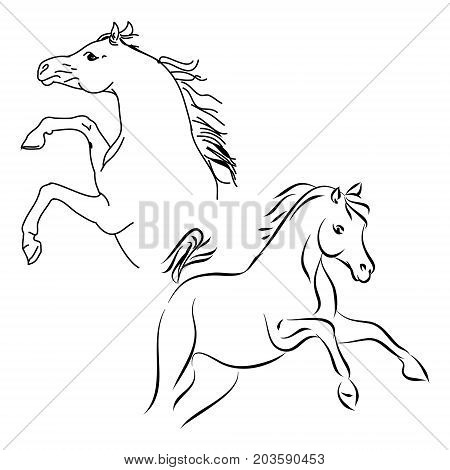 Stallions contour on white background vector illustration
