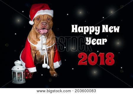 Red dog, pit bull in costume of Santa Claus. Postcard with an inscription happy New Year 2018