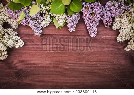 lilac is white and lilac. Vignette of lilac against the backdrop of a green garden. Background.  Place for text