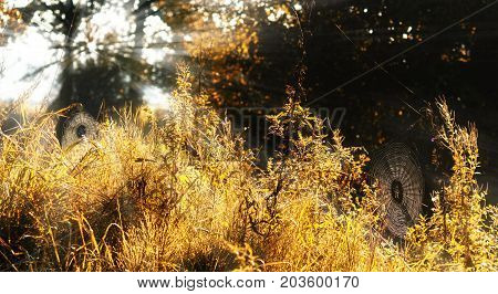 spider nets on an autumn meadow at the forest in the morning light with sunrays halloween or nature background copy space selected focus narrow depth of field