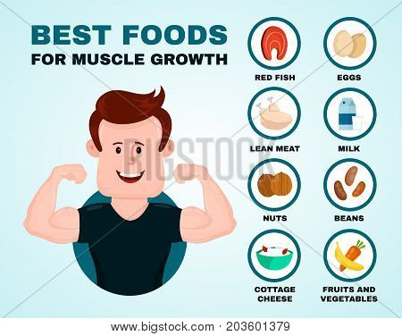 Best foods for muscle growth infographic.Vector flat cartoon illustration. Isolated on blue backgound.Health food, diet, products, fitness, sport, bodybuilding nutrition, nutriment infographic concept