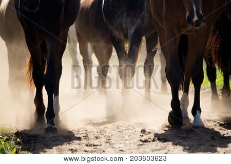 Close Up Of Horse Herd Walking To The Pasture