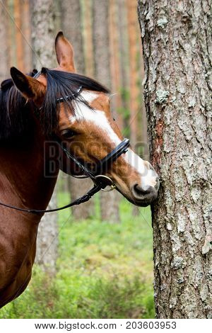 Funny Horse Chewing On The Tree Log