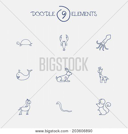 Set Of 9 Editable Zoology Doodles. Includes Symbols Such As Cachalot, Lobster, Pony And More