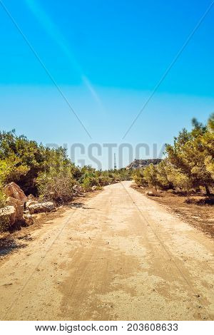 Pine tree grove, road on Kavo Greco in national forest park, Cyprus Ayia Napa, Cape Greco peninsula