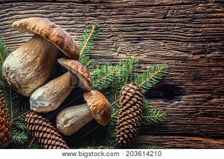 Fresh Boletus Edulis Mushrooms With Spruce Bunch And Cones On Rustic Woden Table