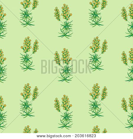 Prickly thrift. Vintage floral seamless pattern. Vector illustration.