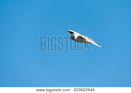 A seagull flying in the beautiful blue sky.