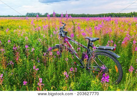 Novosibirsk oblast Siberia Russia - July 10 2017: a Bicycle among wildflowers in a meadow in the wild
