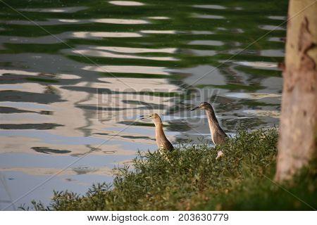 heron couple together in beautiful lake area