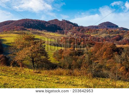 Tree On Hillside In Late Autumn Countryside