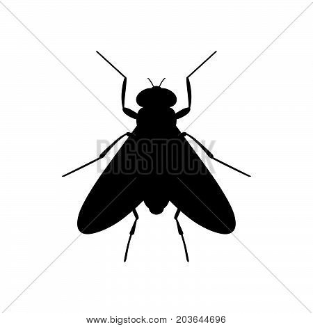 Fly ( Diptera ) ( shade picture )