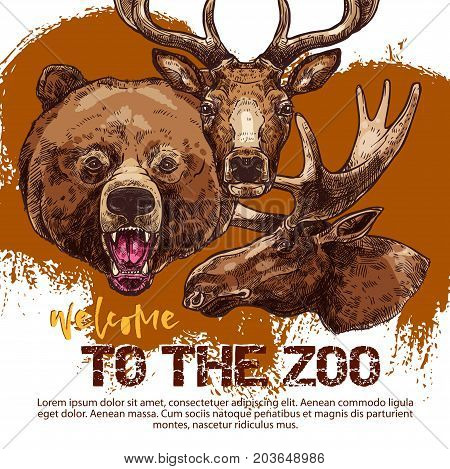 Zoo banner with animal sketches. Heads of roaring bear, deer and elk or moose, wild animal poster template for zoo advertising invitation, flyer or ticket design