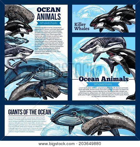 Whale and shark, giant ocean animal banners. Whale, reef shark, killer whale or orca and hammerhead shark sketch poster, marine animal flyer for zoo, oceanarium, marine mammal park design