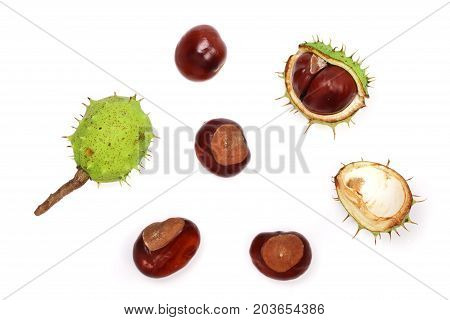 chestnut isolated on white background. Top view.