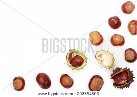 chestnut isolated on white background with copy space for your text. Top view.