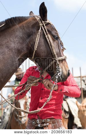June 10 2017 Toacazo Ecuador: man arranging horse before rodeo starts in the high altitude Andean village