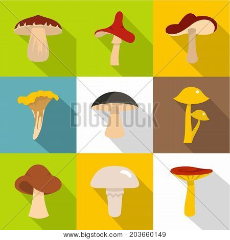 Edible mushrooms icon set. Flat style set of 9 edible mushrooms vector icons for web design