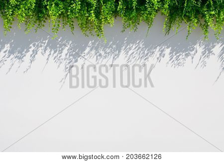 white blur background with grass and shadow above