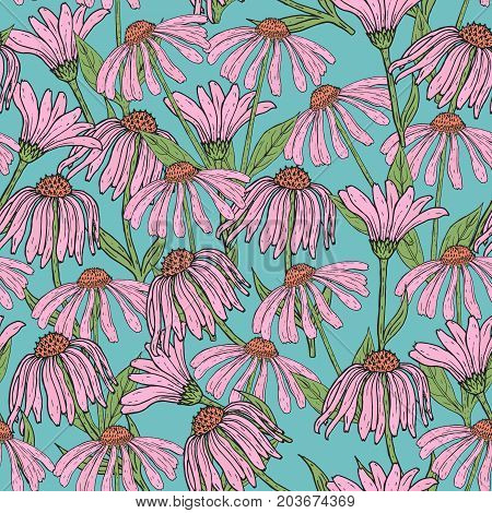 Romantic floral seamless pattern with beautiful echinacea flowers, stems and leaves on blue background. Flowering herb hand drawn in antique style. Vector illustration for wallpaper, wrapping paper