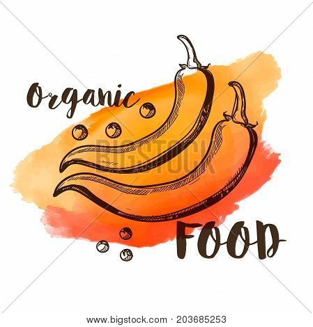 Red pepper chilli vector doodle style on a watercolor background, text organic food
