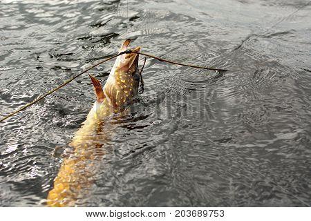 Summer fishing, pike fishing, spinning on the lake