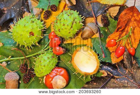 Autumn Still Life Catkin, Acorn, Chestnut, Mushroom, Brier On Wood Background