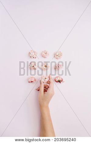Girl's hand holding pink dry rose buds on pink background. Flat lay top view. Flowers background.