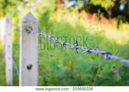Barbed Wire Fence In Overgrown Plant