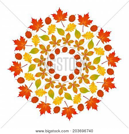 vector colored round autumn mandala with leaves of maple oak beech horse chestnut and alder - adult book page