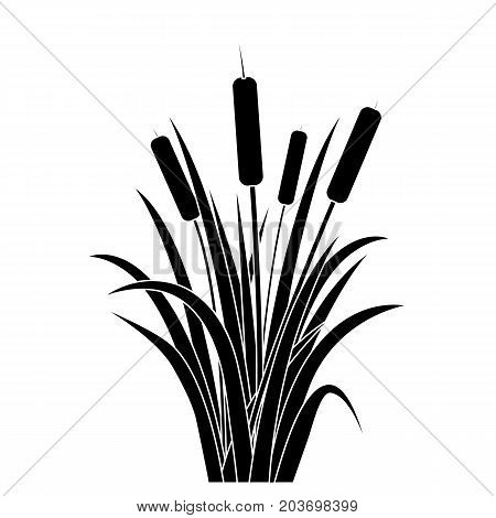 Silhouette Black Water Reed Plant Cattails Leaf Grass Environment Swamp, Lake and River. Vector illustration
