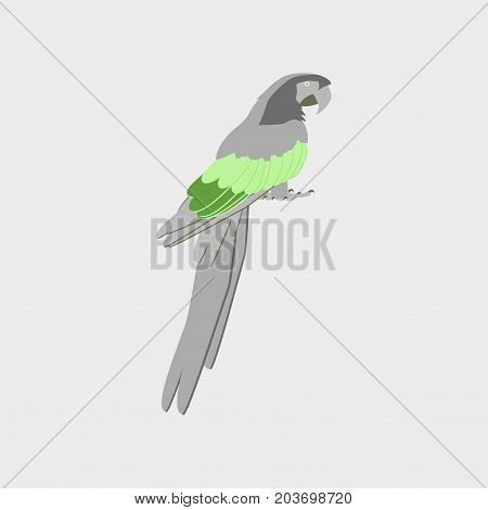 Vector illustration in flat style parrot fauna