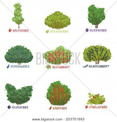 Different garden berry shrubs sorts with names set, fruit trees and berry bushes vector Illustrations on a white background
