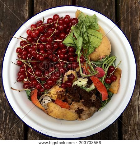 High angle view of fresh organic rubbish with red currants in a small white bowl for recycling