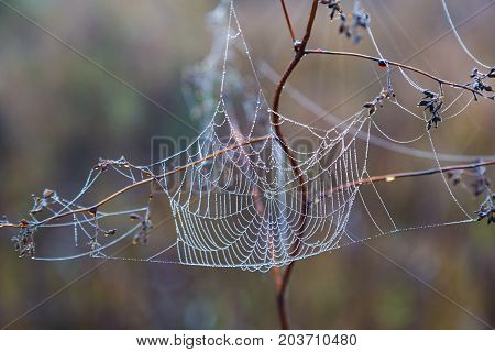 delicate spiderweb in drops of morning dew on the natural blurred background. autumn etude