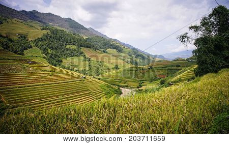 Terraced Rice Field In Northern, Vietnam