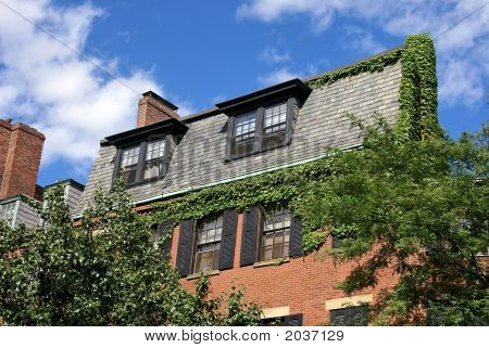 Ivy Covered Home