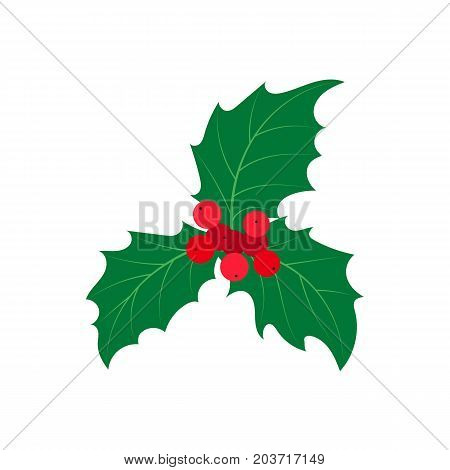 vector flat cartoon style holly tree, mistletoe or ilex leaves with berry . Isolated illustration on a white background. Christmas cards, banners of presentation decoration design symbol
