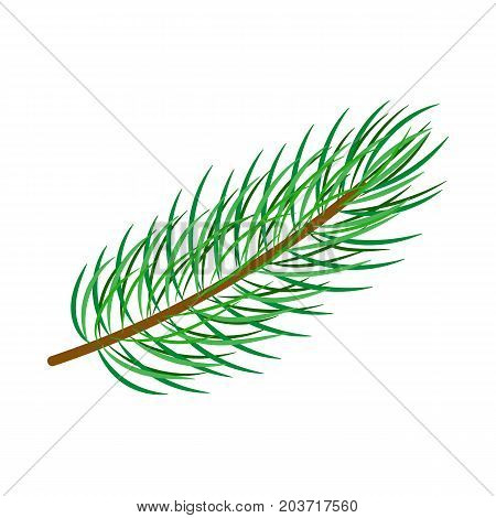 vector flat cartoon style spruce, pine fir tree leaves - needles on branch. Isolated illustration on a white background. Christmas cards, banners of presentation decoration design symbol