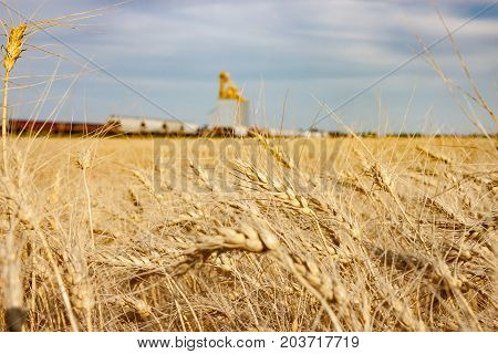 Golden Wheat Field With Train Passing Grain Elevator