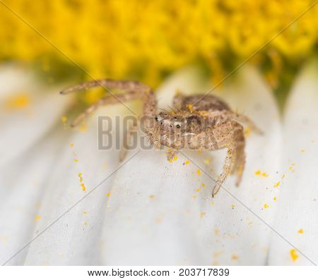 Spider on a flower in the nature. close