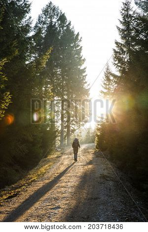 Woman hiker walking on a mountain road sun shining through the trees enjoying solitude. Active lifestyle into the wild and into the light concept.