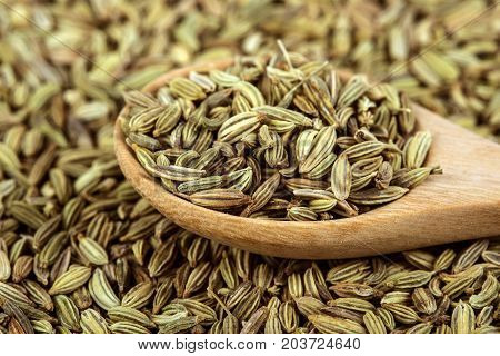 close up fennel seed in wooden spoon