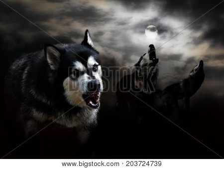 dark gloomy night with the moon in the clouds three wolves