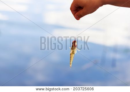 Fish Goby On The Hook With A Worm. Caught Fish On The Hook