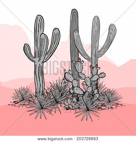 Cacti group. Prickly pear cactus, blue agaves, and saguaro. Mexico hand drawn card. Vector illustration. Stylish palette. Mountains background.